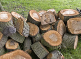 cut logs in forest firewood timber forestry poster
