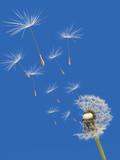 wind - 5416328