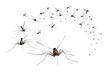 Leinwandbild Motiv A swarm of mosquitos - grab the bug spray! 3D render.