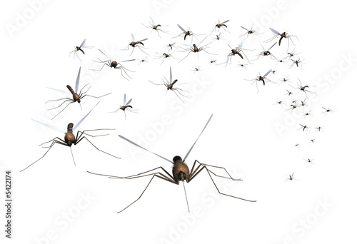 A swarm of mosquitos - grab the bug spray! 3D render. - 5422174