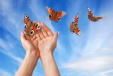 Fototapety farfalle