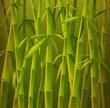 design of bamboo trees, illustration background