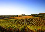 Fototapety Vineyard in Italy