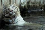 Fototapeta albino - zwierzę - Dziki Ssak