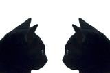 gatos negros poster