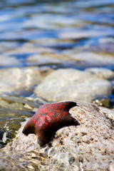 A starfish laying on a stones