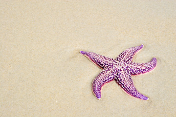Russia. Sea reserve. A starfish laying on a sand beach.