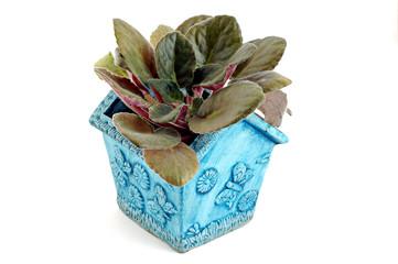 Flower in flowerpot