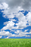meadow against summrer sky with cumulus clouds poster