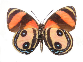 orange and black butterly
