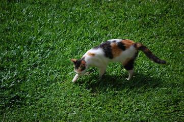 defecating cat bury up its faeces