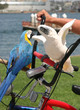 Cockatoo and Macaw