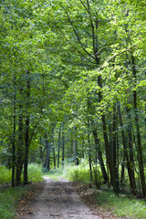 Ground road in the summer forest