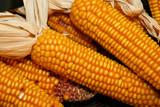 several corn kernels close up poster