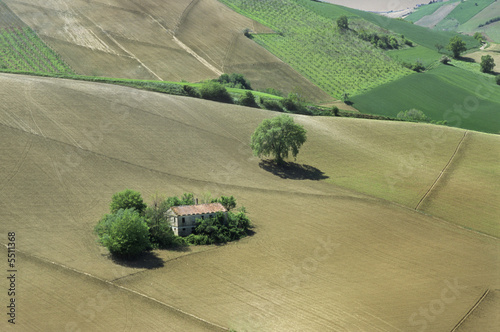 A rural house on a sloping field surrounded by vineyards