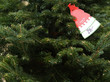 a price tag on a Fraser Fir Christmas tree