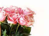 pink roses isolated on white for Valentine's Day