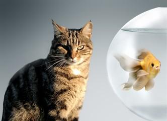 gatto&pesce