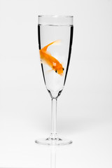 poisson verre eau seul