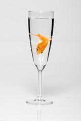 verre eau poisson 2