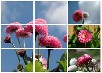 Frühlung pure Natur
