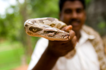 Snake charmer holding in hand a python