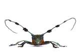 Tropical Rainforest Longhorn Beetle- Diastocera wallichi. poster