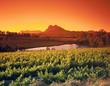 Weinberge bei Paarl, Südafrika