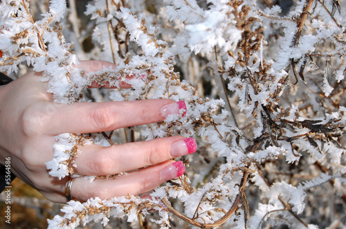 Nailsdesign - Frost