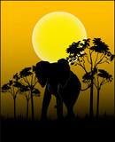 Tiere aus Afrika - Vector poster