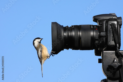Chickadee on a Camera Lens