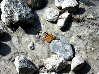River butterfly