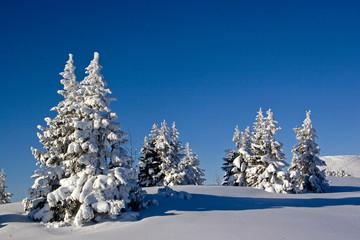 Ein winterlicher Sonnentag in Oberbayern