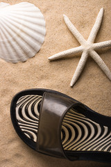 A white sea star, a shell and a sand shoe