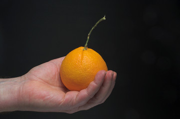 A person holding a freshly picked orange.