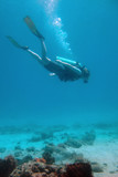 The Diver - 5616517