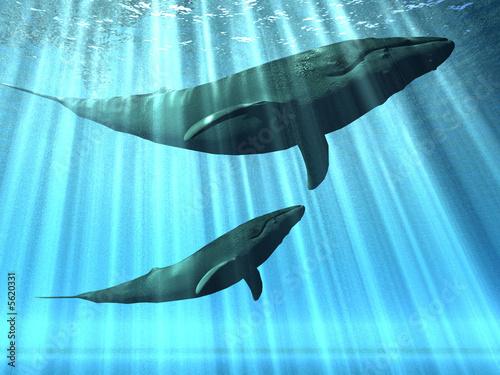 baleiny