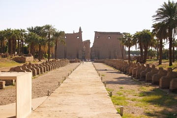 Egypt - Luxor - view of temple
