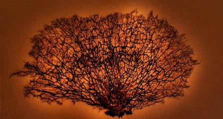 modern art - Koralle