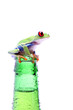 Leinwanddruck Bild frog on a bottle - red-eyed tree frog isolated on white