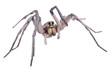 Wolf spider on white - 5630756