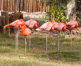 Red Flamingo Flock on a Patch of Green Grass poster