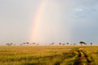 Beautiful Rainbow in the Kenyan Savannah. Massai Mara.