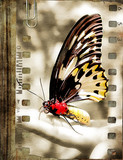 retro film strip with butterfly  poster