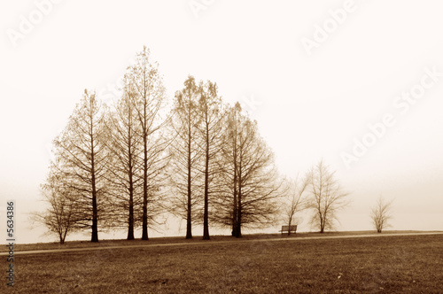Trees against fog by the shore of a lake. - 5634386
