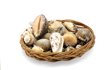 circular tbasket  with shells isolated against  white