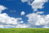 field with cumulus clouds, focus set in foreground poster