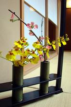 Oncidium orchidea z ikebany
