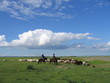 Steppe Mongole 1