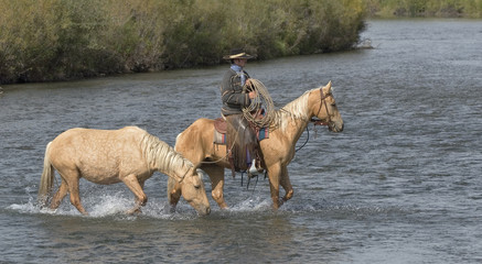 Cowboy with his palominos crossing river